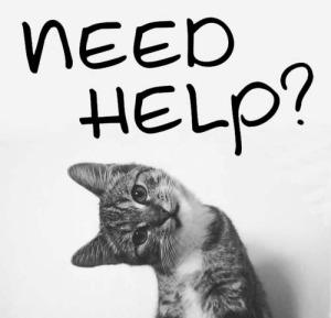 need seo help cat